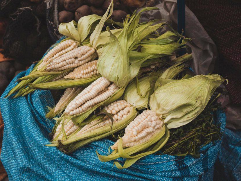 Worek z kolbami kukurydzy