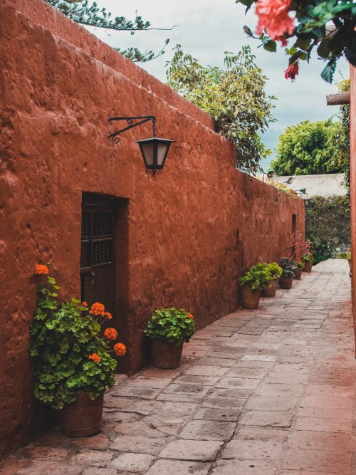 Czerwone ściany i różowe kwiaty