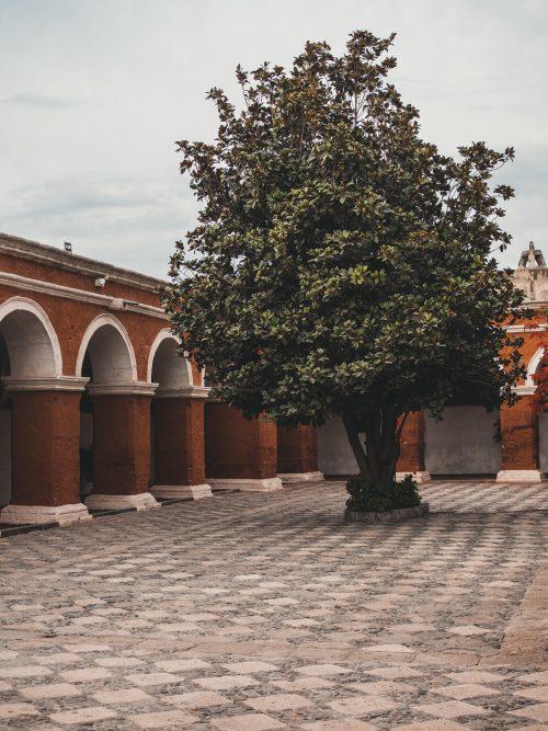 arequipa klasztor św katarzyny Drzewo na placu