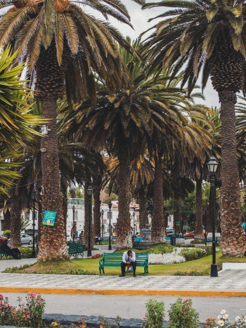 Mężczyzna na ławce w parku z palmami