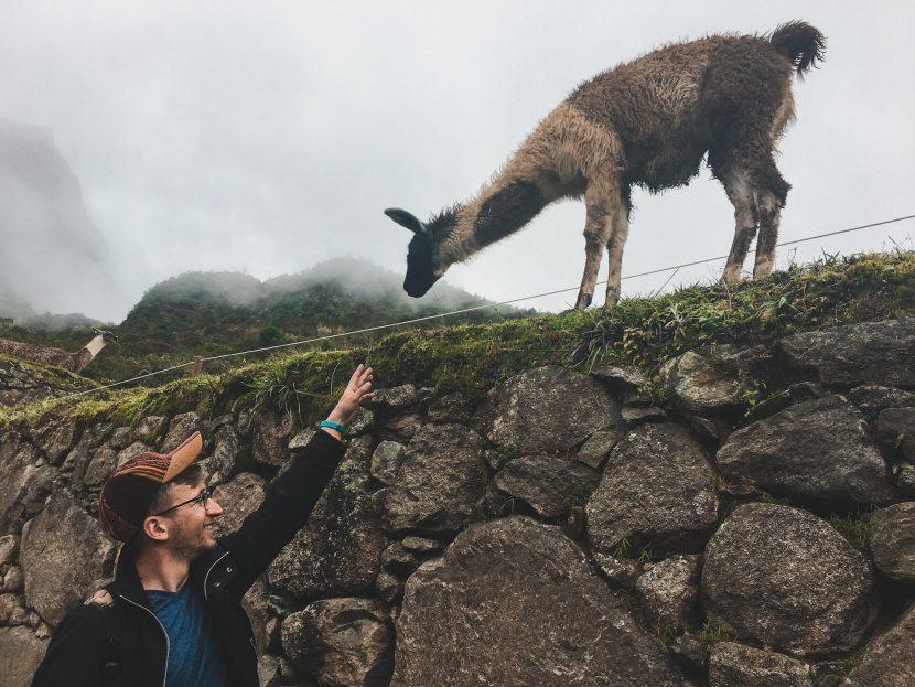Machu Picchu - zdjęcie z alpaką