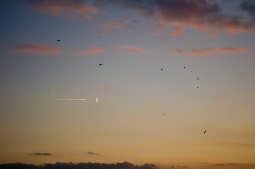 niebo nad miastem ptaki i księżyc