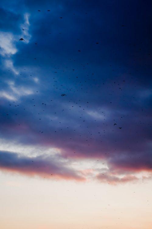 niebo pełne ptaków