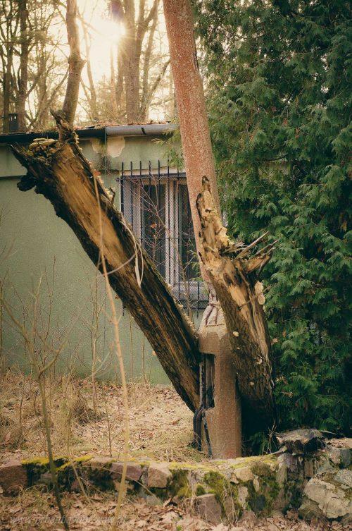 Drzewo rozerwane na latarni