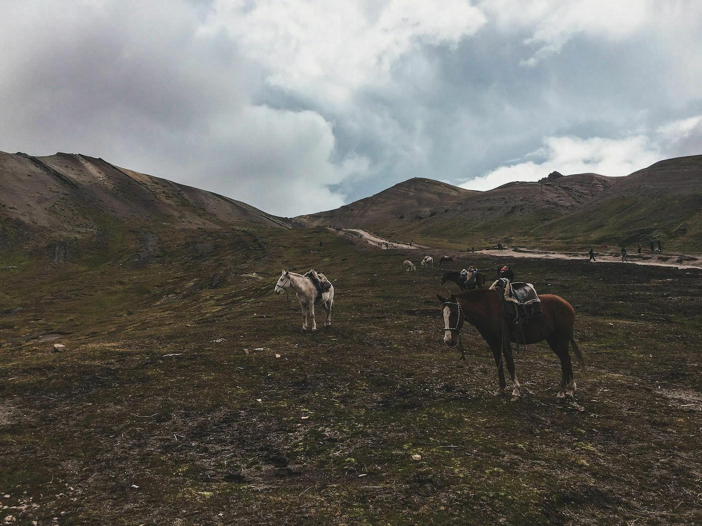 Konie na zboczu tęczowej góry