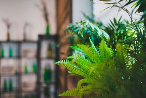 Liście paproci we wnętrzu restauracji